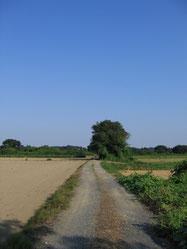 自宅近くの田舎道