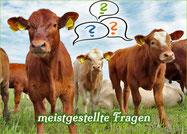 FAQ Rinder-Patenschaft | Mein BioRind