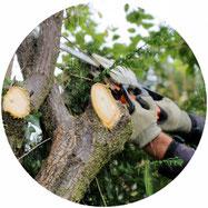 Baumfällung Baumpflege, Gartenbau