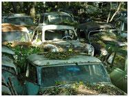 Autofriedhof Gürbental
