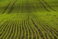 Agraranalytik