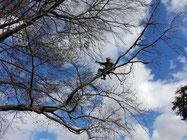 Baumpflege (SKT)