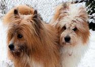 Hunderasse für Anfänger kinderfreundlicher Hund welpen