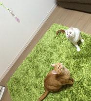ソラ&ビビちゃん♪