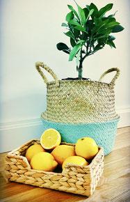 Lemon-tree & lemons