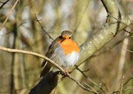 Frühlingsexkursion:  Natur und Vogelschutzverein Küttigen Rombach