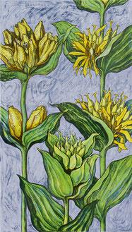 Nr.990 gelber Enzian