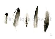 N°7 plumes siffleur