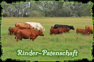 Rinderpatenschaft | Mein BioRind
