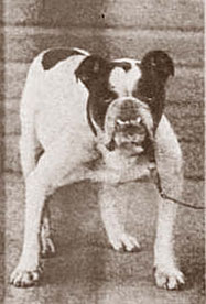King Orry (*25.01.1889)