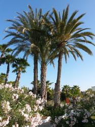 Een blik op één van de vele palmboomoases die het zuidelijk deel van het eiland rijk is.