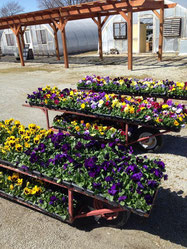 Sunnyside Greenhouses
