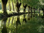 vue d'un canal dans la Venise verte