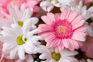 Blumen für die Liebe