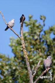 Oiseaux dans un arbre - Port de la Cotinière - Ile d'Oléron - Béanico-Photo