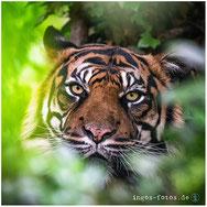 Ingo Hamann, ingos-fotos, Fotos Zoo Frankfurt Zoofotografie
