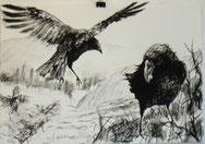 """Krähe mit Maiskorn"", Reißkohle, A3, 2011, verkauft"