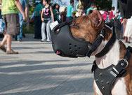 Comment choisir une muselière pour son chien ?