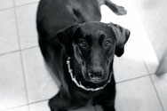 Les colliers de dressage pour chiens