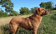 Témoignage Éducation canine dressage Charente Maritime (7)