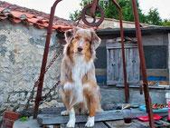 Témoignage Éducation canine dressage Charente Maritime (20) daisy