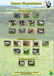 Milch-, Fleisch sowie Wollziegenrassen im Format DIN A1 à 5,- EUR zzgl. Versand