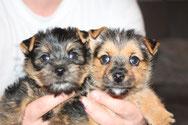 Bailey (Fanny) & Bolle (Maxi)