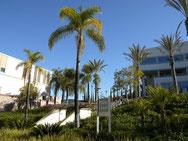 Der Palm Court der CSU San Marcos