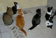 Hoschi, Foxli, Bärli, Chrüsimüsi und Kuki