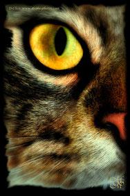 Opale oeil de chat