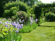 les iris fleurissent .....