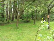dans le jardin, à l'orée du bois
