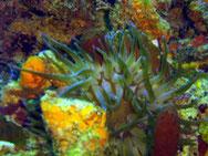 Randonnée aquatique PMT Guadeloupe