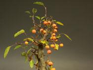 Äpfel bleiben bis in den Winter an der Pflanze hängen