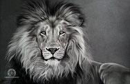 Le lion, 40x26cm