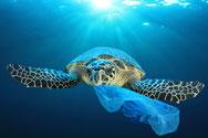 プラスチックを食べるウミガメと海洋プラスチック問題