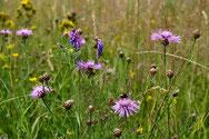 Das Ziel sind blütenreiche Wiesen, die weiterhin als Heuwiesen oder Weiden genutzt werden sollen.