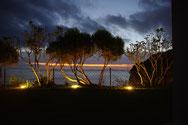 Pflanzenkulisse mit Beleuchtung von unten