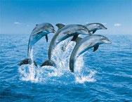 BL dolfijnen