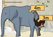 hoe hoog is een dier ?