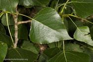 foto + namenlijst planten