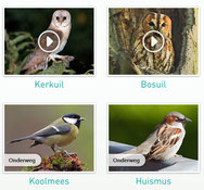 webcam vogelnestjes