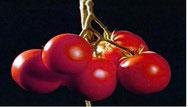hoe groeit een tomaat (npo-filmpje)