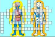 menselijk lichaam (L5-6)