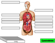 digipuzzel organen