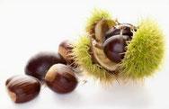 bomen en hun noten kruiswoordraadsel
