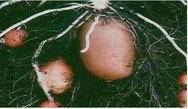 hoe groeit een aardappel (npo-filmpje)