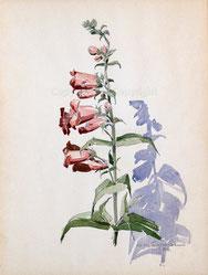 Nr. 2782 Blumenmotiv