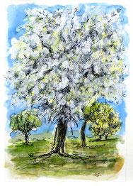 Nr.363  Blühender Obstbaum