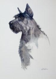 Nr. 1568 Hundeportrait